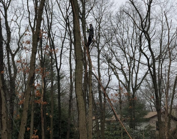 tree service worker in Nassau county