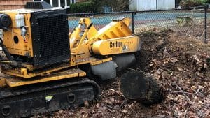 stump grinding Nassau county